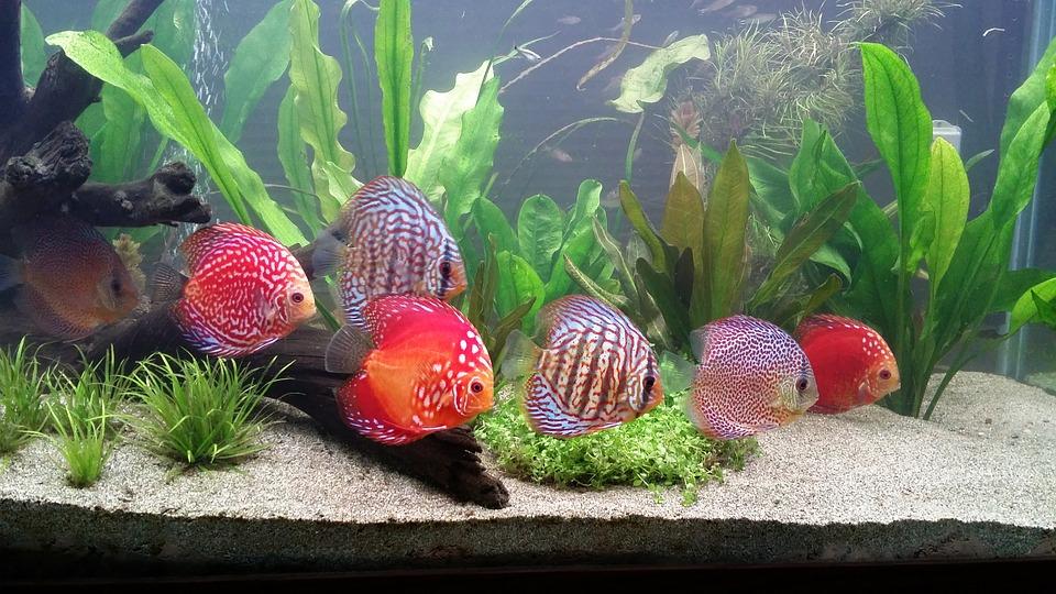 meilleur-èclairage-pour-aquarium